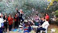 Lübnan'da Zeytin Hasadı Yapan Kadınlar Şarkı Söylerken Siz Hipnoz Olacaksınız
