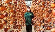 Evinin Balkonunda 40 Kilo ile Başladı Şimdi Yıllık 50 Ton Cennet Elmasını Kurutup Satıyor