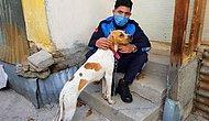 Sopayla İşkence Edilen Köpeği Zabıta Görevlisi Sahiplendi