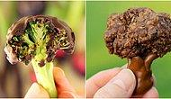 Ercan Altuğ Yılmaz Yazio: Ebeveynler İçin Oyunlaştırma 1 - Çikolata Kaplı Brokoli