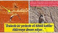 Yerin Dibine Batsın Av Merakınız! Yedi Yıl Sonra İlk Defa Trabzon'da Görülen Yakalı Toy Kuşunu Avcılar Öldürdü
