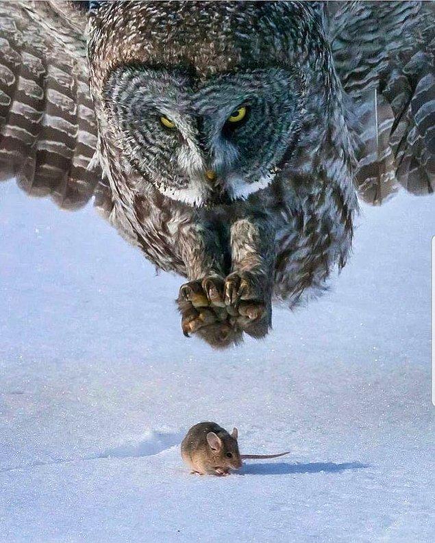 9. Avlanan bir baykuş: