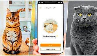 En Yakın Dostlarımızdan Biri Olan Kedilerin Miyavlamalarını Anlamak İçin Geliştirilen Yeni Uygulama: MeowTalk