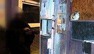 Tuzla'da Kan Donduran Olay! Yavru Kediyi Kesip Yemeye Götürürken Yakalanan Kadın İfadesinde Her Şeyi İtiraf Etti