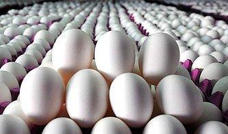 Bu Yumurtalar Hangi Hayvanlara Ait?