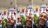 İnsan Dostu ile Birlikte Kahkaha Atan Melo İsimli Kuşun İzlerken Acayip Keyifleneceğiniz Anları