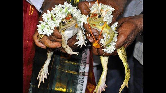 6. Bir kurbağa çiftin nikah törenine denk gelebilirsiniz.