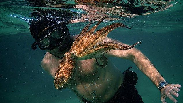 2. My Octopus Teacher