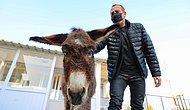 İşkenceye Maruz Kalan Eşek Barınağa Alındı, İlk Ziyaretçisi Haluk Levent Oldu: 'Hayvan Hakları Yasası Bir An Önce Çıkmalı'
