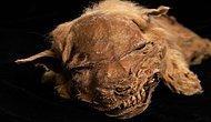 Onun Adı Zhur: Kanada'da Çok İyi Bir Şekilde Korunmuş 57 Bin Yıllık Yavru Kurt Fosili Bulundu