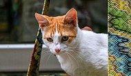 Hayvanseverlerden 'Kedilerin Ayakları Büyü İçin Kesiliyor' İddiası