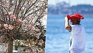 İstanbul'un Biyolojik Ritmi Bozuldu: 'Aralık Ayında Ağaçların Çiçek Açması Normal Değil'