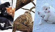 Kalpleri Soğuktan Değil, Mutluluktan Titresin! Soğuk Havalarda Sokak Hayvanları İçin Yapabileceğiniz 8 Şey
