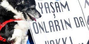 Hayvan Hakları Yasası Hâlâ Meclis'te Bekliyor: Yine Bir Yavru Köpeğin Bacakları Kesildi