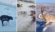 Kazakistan'ın En Büyük Metropollerinden Almatı'da Soğuktan Donan Hayvanların Görüntüleri