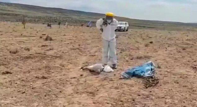 Kasım ayından beri 50 hayvan öldü