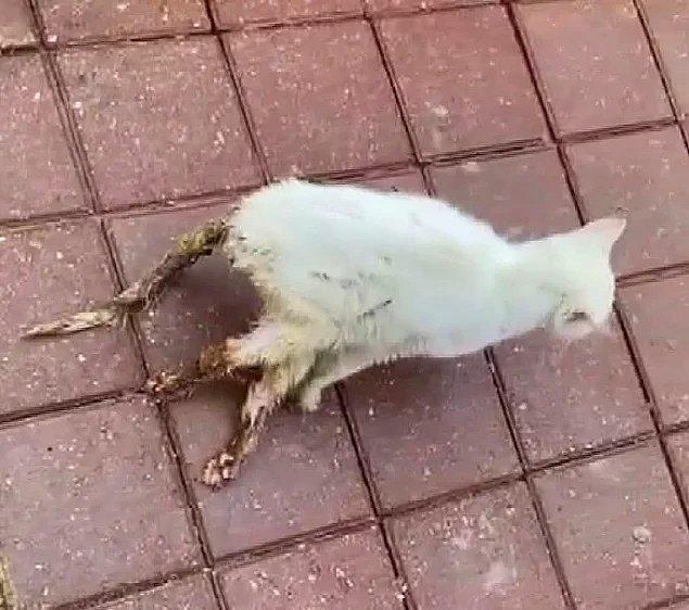 4. Adana'da bir kedinin tüfekle vurulması...