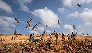 Çekirge İstilası Nedeniyle OHAL İlan Edildi: Günde 35 Bin Kişiye Yetecek Gıdayı Tüketiyorlar