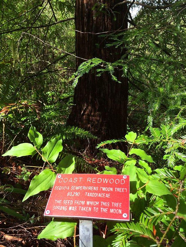1996'da ağaçları bulmak için proje başlatıldı