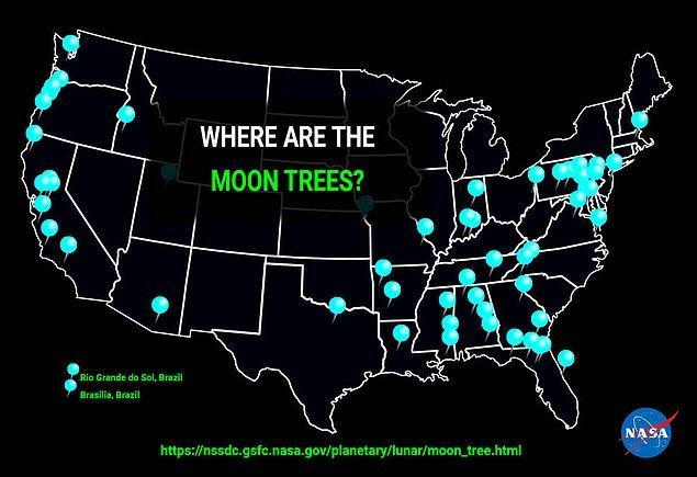 Ay ağaçları nerede?