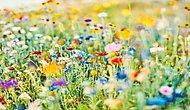 Seni Anlatan Çiçeği Buluyoruz!