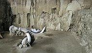 Sibirya'da Şaşırtan Keşif! 1 Milyon Yıllık Mamut Fosillerinden DNA Elde Edildi