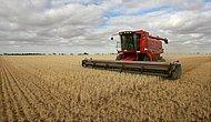 Türkiye, Buğday İthalatında Çin'i Bile Geride Bırakarak Dünya Rekoru Kırdı