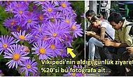 Uzmanlar Bile Şaşkın: Vikipedi Sayfası Günde 90 Milyon Ziyaretçi Alan Mor Papatyanın Gizemi