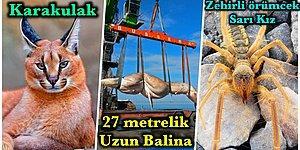 Daha Önce Hiçbirini Görmedik! Türkiye'de Yaşayan ama Şu Ana Kadar Çoğumuzun Karşılaşmadığı 16 Hayvan