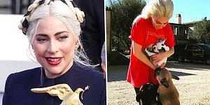 500 Bin Dolar Ödül Verecek: Lady Gaga'nın Köpekleri Çalındı