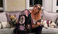 Lady Gaga'nın Kaçırılan Köpekleri Bulundu