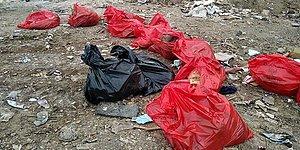 Ankara'da Molozların Arasında 20 Ölü Köpek Bulundu...