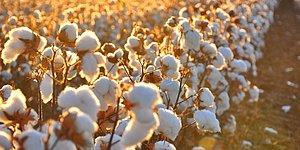 'İthal Edilen Tohumlarda GDO'ya Rastlandı' İddiası