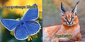 Türkiye'de Yaşadıklarına İnanamayacağınız ve Görmek İsterseniz de Muhtemelen Göremeyeceğiniz 10 Hayvan