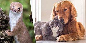 Kedi, Köpek ve Gelincik Sahiplerine Pasaport ve Mikroçip Takma Zorunluluğu