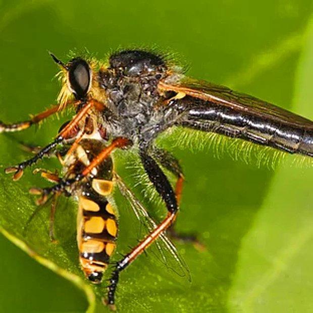 Karşılıklı İki Böcek