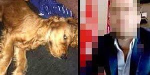 Köpeğe Cinsel İstismarla Suçlanan Şahsa 3 Yıla Kadar Hapis İstemi