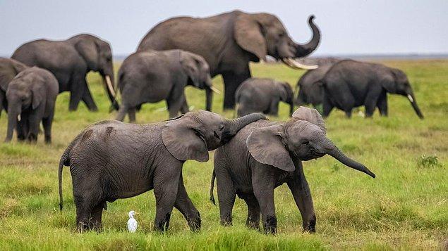 5. Filler, gruplarında herhangi bir yönden sakatlanmış üyeleriyle empati kurup beslenmelerine yardımcı oluyor ve onları beklemeyi kendilerine görev ediniyor.