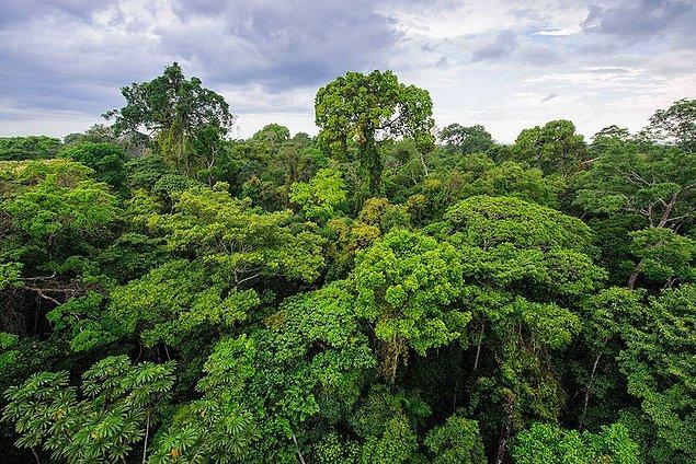 12. Peru, dünyadaki biyolojik çeşitliliğin en fazla olduğu ülkelerden biridir.