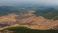Kaz Dağları'nda 350.000 Ağaç Yok Edilmişti: Bakan 'En Hızlı Şekilde Ağaçlandıracağız' Dedi...