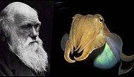 Omurgasızlar da Kendilerini Kontrol Edebilecek Şekilde Evrimleşiyorlar: Mürekkep Balığı ve Marshmallow Testi