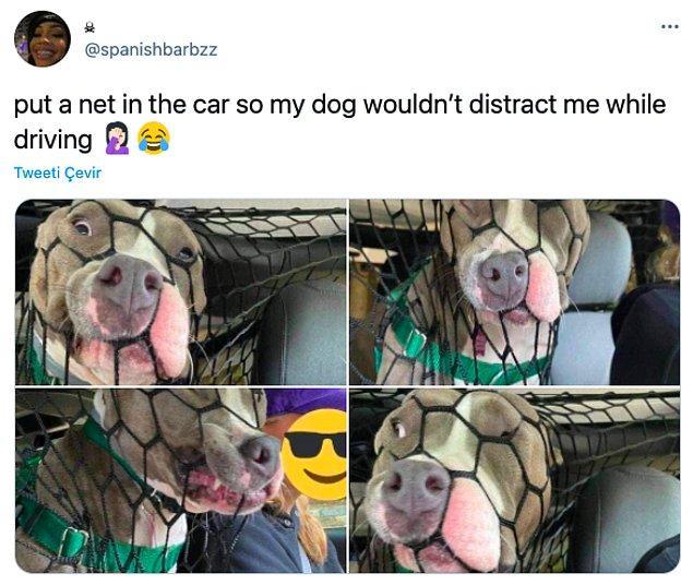 """4. """"Araba kullanırken köpeğim dikkatimi dağıtmasın diye arabaya ağ taktım."""""""