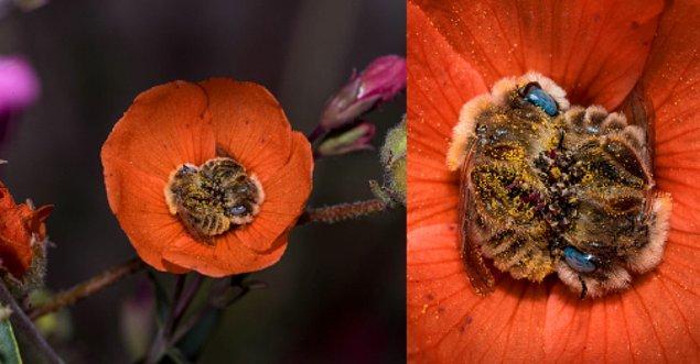 9. Arılar her gün 5-8 saat uyumaktadırlar (bu süreçte birbirlerine sarılmanın tadını çıkarırlar), ve aynı zamanda bazı araştırmalar arıların rüya gördüğünü bile ileri sürmektedir.