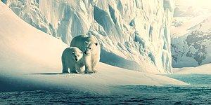 Hemen İzlemen Gereken Doğa Temalı Belgeseli Söylüyoruz!