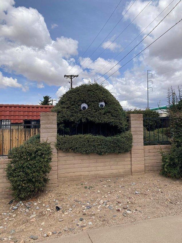 """1. """"Komşum bahçesindeki ağaca böyle bir dekor yapmış.""""😅"""