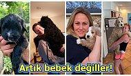 Köpeklerinin Öncesi ve Sonrası Hallerini Paylaşarak Hayvan Sevgimizi Depreştiren 30 Kişi