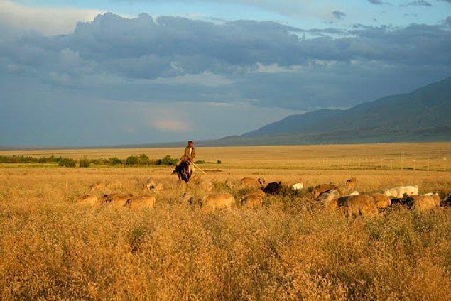 8. Kazak Bozkırları türünün en büyüğüdür ve ülkenin üçte birini kaplar.