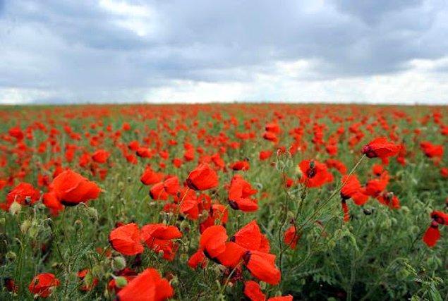 15. Kazakistan, yaklaşık 1300 çiçekli bitki türünün bulunduğu bir doğa rezervine sahiptir.
