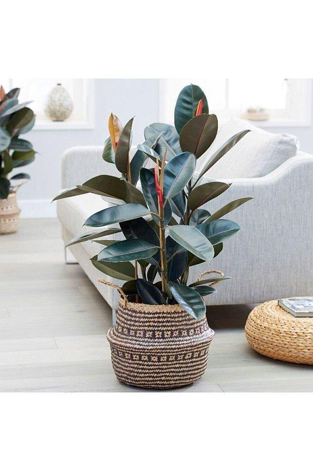 14. Yaşayan bir ev olmanın birinci şartı bitkiler.
