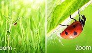 Hayattaki Küçük Detayların Büyük Farklar Yaratabileceğinin 10 Kanıtı